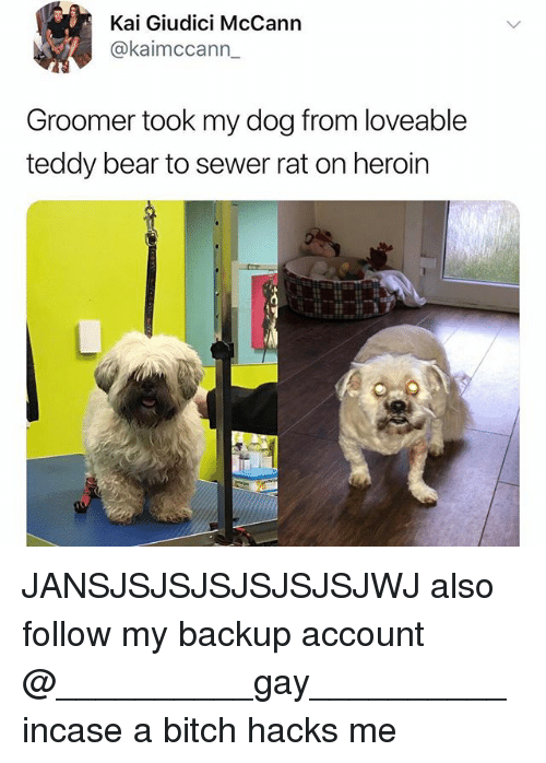 Bitch, Heroin, and Memes: Kai Giudici McCann  @kaimccann  Groomer took my dog from loveable  teddy bear to sewer rat on heroin JANSJSJSJSJSJSJSJWJ also follow my backup account @__________gay__________ incase a bitch hacks me