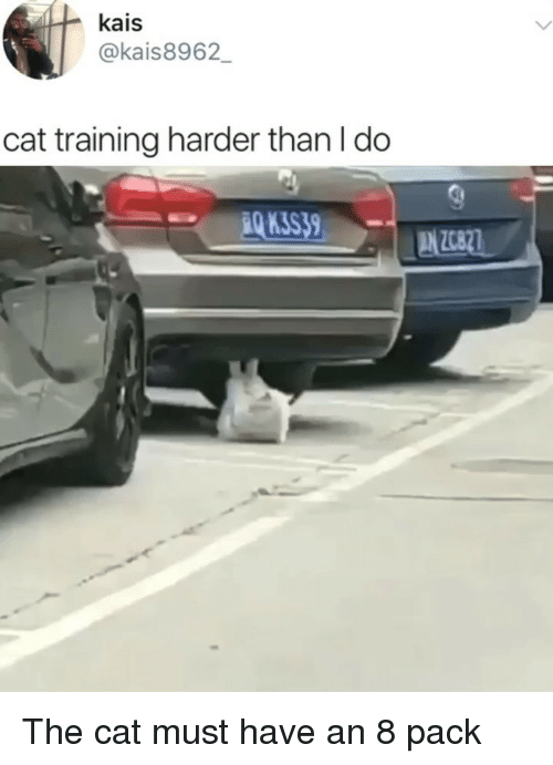 Memes, 8 Pack, and 🤖: kais  @kais8962  cat training harder than I do  Q K3S39 The cat must have an 8 pack