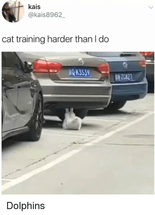 Memes, Dolphins, and 🤖: kais  @kais8962  cat training harder than l do  3S39 Dolphins