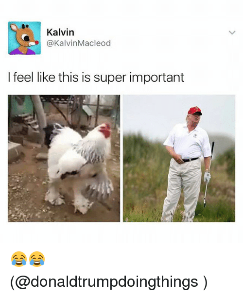 Funny, Meme, and Super: Kalvin  @Kalvin Macleod  I feel like this is super important 😂😂 (@donaldtrumpdoingthings )