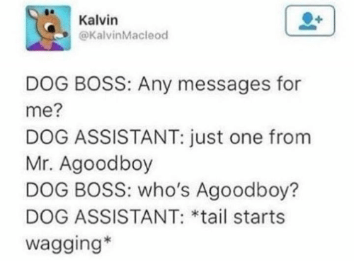 Dog, Boss, and Tails: Kalvin  @KalvinMacleod  DOG BOSS: Any messages for  me?  DOG ASSISTANT: just one from  Mr. Agoodboy  DOG BOSS: who's Agoodboy?  DOG ASSISTANT: *tail starts  wagging*