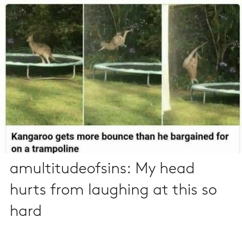 Head, Tumblr, and Blog: Kangaroo gets more bounce than he bargained for  on a trampoline amultitudeofsins: My head hurts from laughing at this so hard