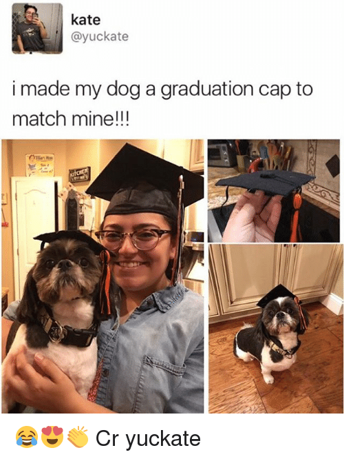 Memes, Match, and 🤖: kate  Cayuckate  i made my dog a graduation cap to  match mine!!! 😂😍👏 Cr yuckate