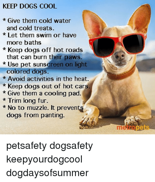 Can Dogs Get Rug Burn On Their Paws: KEEP DOGS COOL * Give Them Cold Water And Cold Treats Let