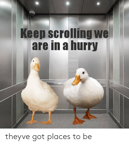 Got, They, and Hurry: Keep scrolling we  are in a hurry theyve got places to be