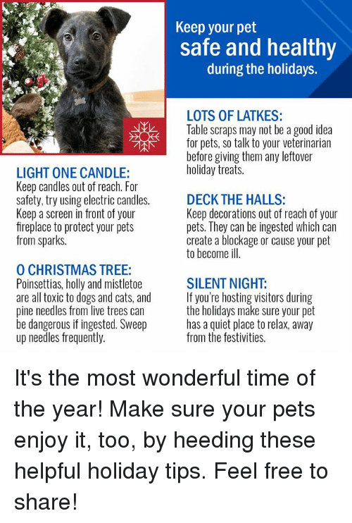 Cats, Christmas, and Dogs: Keep your pet  safe and healthy  during the holidays.  LOTS OF LATKES:  Table scraps may not be a good idea  for pets, so talk to your veterinarian  before giving them any leftover  holiday treats.  LIGHT ONE CANDLE:  Keep candles out of reach. For  safety, try using electric candles.  Keep a screen in front of your  fireplace to protect your pets  from sparks.  DECK THE HALLS:  Keep decorations out of reach of your  pets. They can be ingested which can  create a blockage or cause your pet  to become ill.  O CHRISTMAS TREE:  Poinsettias, holly and mistletoe  are all toxic to dogs and cats, and  pine needles from live trees can  be dangerous if ingested. Sweep  up needles frequently.  SILENT NIGHT:  If you're hosting visitors during  the holidays make sure your pet  has a quiet place to relax, away  from the festivities. It's the most wonderful time of the year! Make sure your pets enjoy it, too, by heeding these helpful holiday tips. Feel free to share!