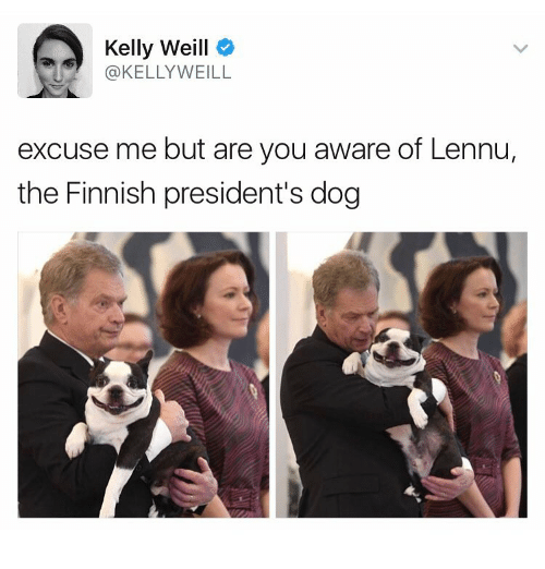 Funny, Meme, and Dog: Kelly Weill  @KELLY WEILL  excuse me but are you aware of Lennu,  the Finnish president's dog