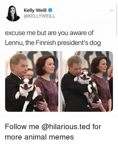 Funny, Memes, and Ted: Kelly Weill  @KELLYWEILL  excuse me but are you aware of  Lennu, the Finnish president's dog Follow me @hilarious.ted for more animal memes