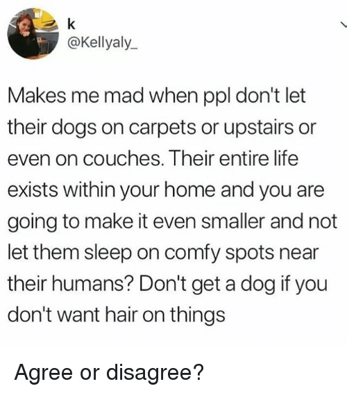 Dogs, Funny, and Life: @Kellyaly  Makes me mad when ppl don't let  their dogs on carpets or upstairs or  even on couches. Their entire life  exists within your home and you are  going to make it even smaller and not  let them sleep on comfy spots near  their humans? Don't get a dog if you  don't want hair on things Agree or disagree?