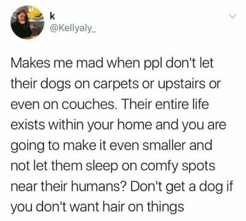Dank, Dogs, and Life: @Kellyaly  Makes me mad when ppl don't let  their dogs on carpets or upstairs or  even on couches. Their entire life  exists within your home and you are  going to make it even smaller and  not let them sleep on comfy spots  near their humans? Don't get a dog if  you don't want hair on things