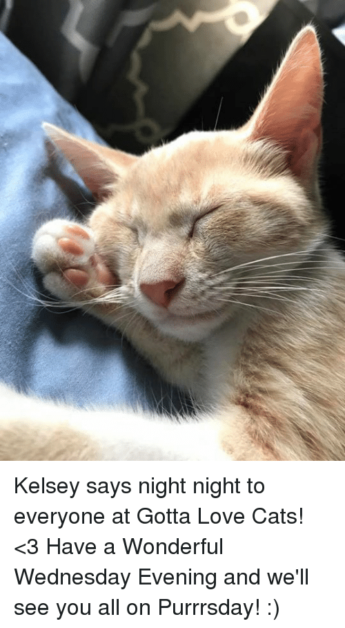 Cats, Love, and Memes: Kelsey says night night to everyone at Gotta Love Cats! <3 Have a Wonderful Wednesday Evening and we'll see you all on Purrrsday! :)