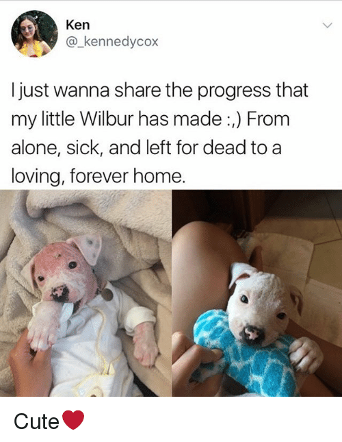 Being Alone, Cute, and Ken: Ken  @kennedycox  I just wanna share the progress that  my little Wilbur has made :,) From  alone, sick, and left for dead to a  loving, forever home. Cute❤️