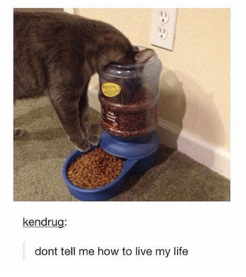 Life, How To, and Live: kendru  dont tell me how to live my life