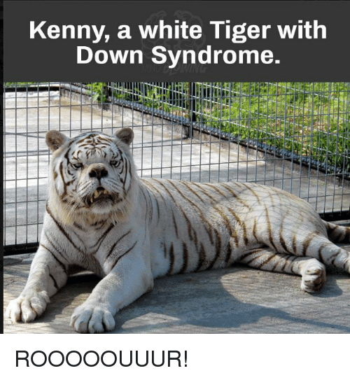 Search white tigers Memes on SIZZLE