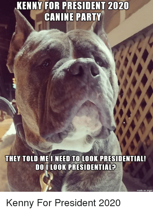 Party, Imgur, and President: KENNY FOR PRESIDENT 2020  CANINE PARTY  THEY TOLD MEINEED TO LOOK PRESIDENTIAL  DO I LOOK PRESIDENTIALA  made on imgur