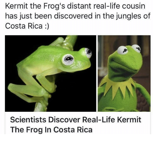 Kermit The Frogs Distant RealLife Cousin Has Just Been - Real life kermit the frog discovered in costa rica