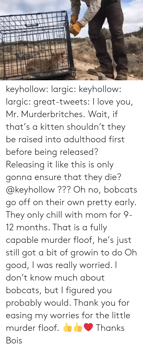 Chill, Love, and Tumblr: keyhollow:  largic:  keyhollow: largic:   great-tweets:  I love you, Mr. Murderbritches.  Wait, if that's a kitten shouldn't they be raised into adulthood first before being released? Releasing it like this is only gonna ensure that they die? @keyhollow ???   Oh no, bobcats go off on their own pretty early. They only chill with mom for 9-12 months. That is a fully capable murder floof, he's just still got a bit of growin to do  Oh good, I was really worried. I don't know much about bobcats, but I figured you probably would. Thank you for easing my worries for the little murder floof.  👍👍❤️  Thanks Bois