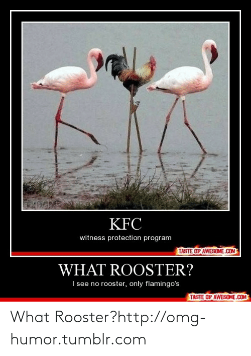Kfc, Omg, and Tumblr: KFC  witness protection program  TASTE OF AWESOME.COM  WHAT ROOSTER?  I see no rooster, only flamingo's  TASTE OF AWESOME.COM What Rooster?http://omg-humor.tumblr.com
