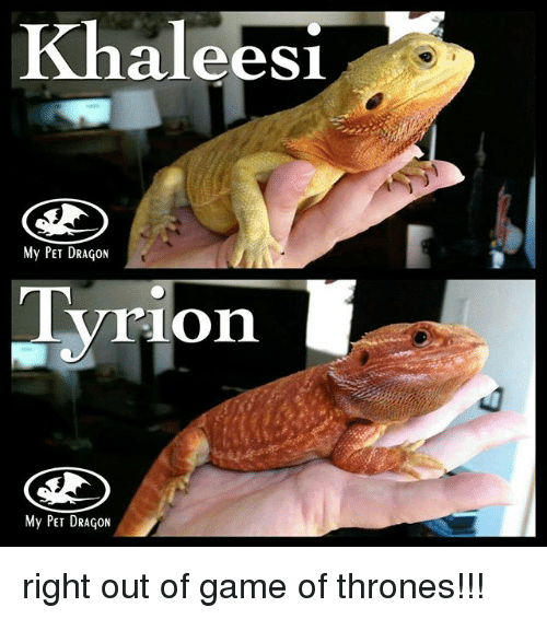 Khaleesi My PET DRAGON Tyrion My PET DRAGON Right Out of Game of