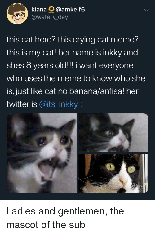 Crying, Meme, and Reddit: kiana @amke f6  @watery_day  this cat here? this crying cat meme?  this is my cat! her name is inkky and  shes 8 years old!!! i want everyone  who uses the meme to know who she  is, just like cat no banana/anfisa! her  twitter is @its_inkky!
