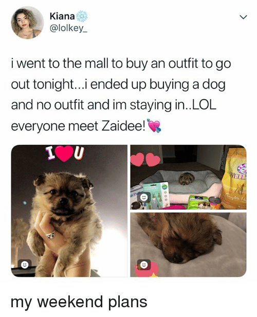 Lol, Relatable, and Dog: Kiana  @lolkey  i went to the mall to buy an outfit to go  out tonight..i ended up buying a dog  and no outfit and im staying in..LOL  everyone meet Zaidee! my weekend plans