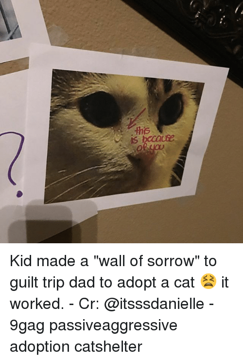 """9gag, Dad, and Memes: Kid made a """"wall of sorrow"""" to guilt trip dad to adopt a cat 😫 it worked. - Cr: @itsssdanielle - 9gag passiveaggressive adoption catshelter"""