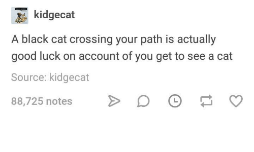 Black, Good, and Humans of Tumblr: kidgecat  A black cat crossing your path is actually  good luck on account of you get to see a cat  Source: kidgecat  88,725 notes >DO ס