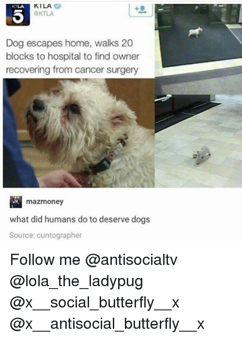 Dogs, Memes, and Butterfly: KILA  OKTLA  KTLA  Dog escapes home, walks 20  blocks to hospital to find owner  recovering from cancer surgery  mazmoney  what did humans do to deserve dogs  Source: cuntographer Follow me @antisocialtv @lola_the_ladypug @x__social_butterfly__x @x__antisocial_butterfly__x