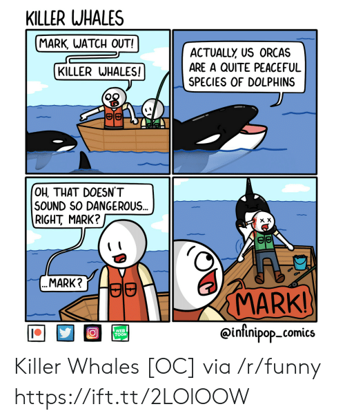 Funny, Killer Whales, and Orcas: KILLER WHALES  MARK, WATCH OUT!  ACTUALLY US ORCAS  ARE A QUITE PEACEFUL  SPECIES OF DOLPHINS  KILLER WHALES  田旧  OH, THAT DOESN'T  SOUND SO DANGEROUS  RIGHT MARK?  MARK?Lap  MARK  WEB  TOON  @intinipop_comics Killer Whales [OC] via /r/funny https://ift.tt/2LOlOOW