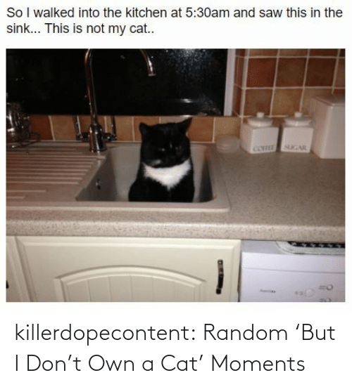 Tumblr, Blog, and Hilarious: killerdopecontent:  Random 'But I Don't Own a Cat' Moments