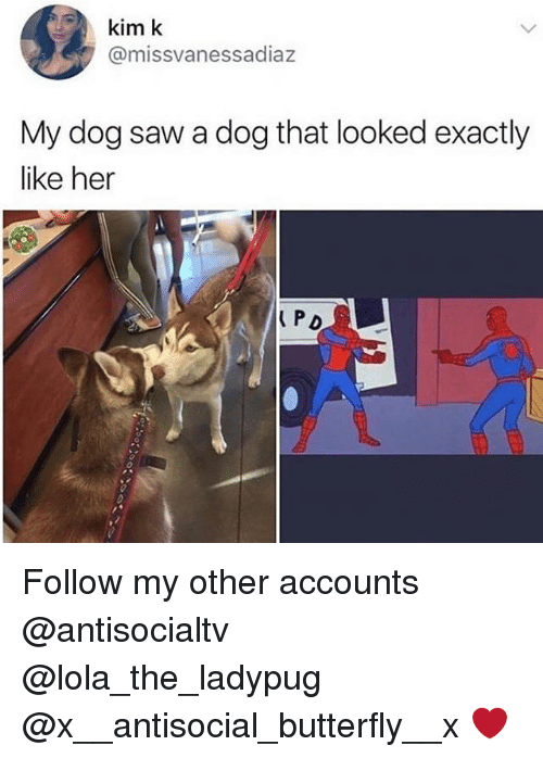 Memes, Saw, and Butterfly: kim k  @missvanessadiaz  My dog saw a dog that looked exactly  like her  PD Follow my other accounts @antisocialtv @lola_the_ladypug @x__antisocial_butterfly__x ❤️