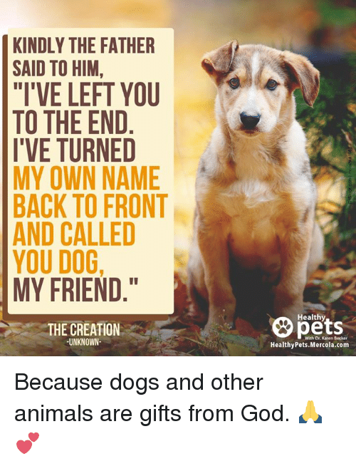 """Animals, Memes, and Animal: KINDLY THE FATHER  SAID TO HIM,  """"I'VE LEFT YOU  TO THE END  I'VE TURNED  MY OWN NAME  BACK TO FRONT  AND CALLED  YOU DOG,  MY FRIEND  THE CREATION  UNKNOWN  Healthy  With Dr. Karen  Healthy Pets.Mercola.com Because dogs and other animals are gifts from God. 🙏💕"""