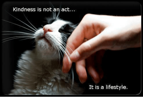Memes, Lifestyle, and Kindness: Kindness is not an act..  It is a lifestyle