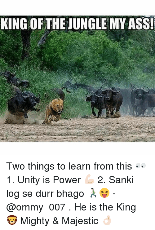 Dekh Bhai, International, and Powers: KING OF THE JUNGLE MYASS! Two things to learn from this 👀 1. Unity is Power 💪🏻 2. Sanki log se durr bhago 🏃🏻😝 - @ommy_007 . He is the King 🦁 Mighty & Majestic 👌🏻