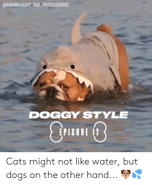 Cats, Dank, and Doggy Style: @KINGMAJESTY AND_PRINCESSROSE  DOGGY STYLE  EPISODE 17 Cats might not like water, but dogs on the other hand... 🐶💦