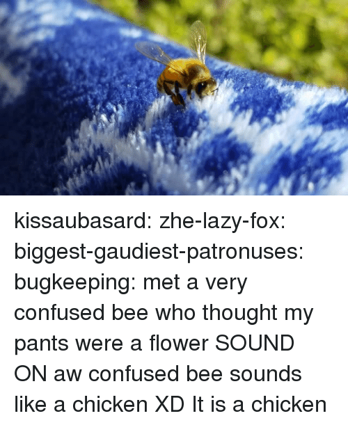 Confused, Lazy, and Target: kissaubasard: zhe-lazy-fox:   biggest-gaudiest-patronuses:  bugkeeping: met a very confused bee who thought my pants were a flower SOUND ON  aw confused bee sounds like a chicken XD   It is a chicken