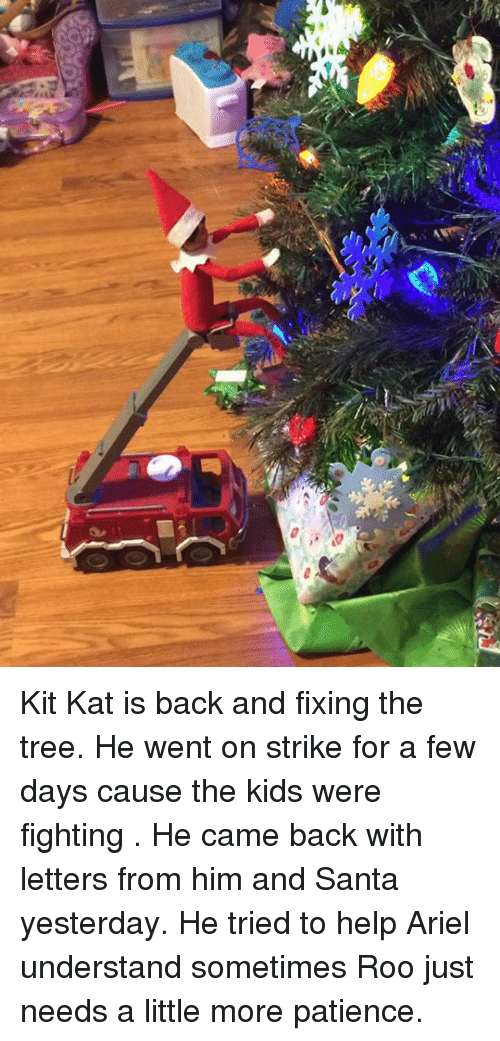 Kit Kat Is Back and Fixing the Tree He Went on Strike for a Few Days ...
