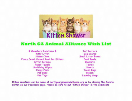 Kit Ten Shower North GA Animal Alliance Wish List Monetary