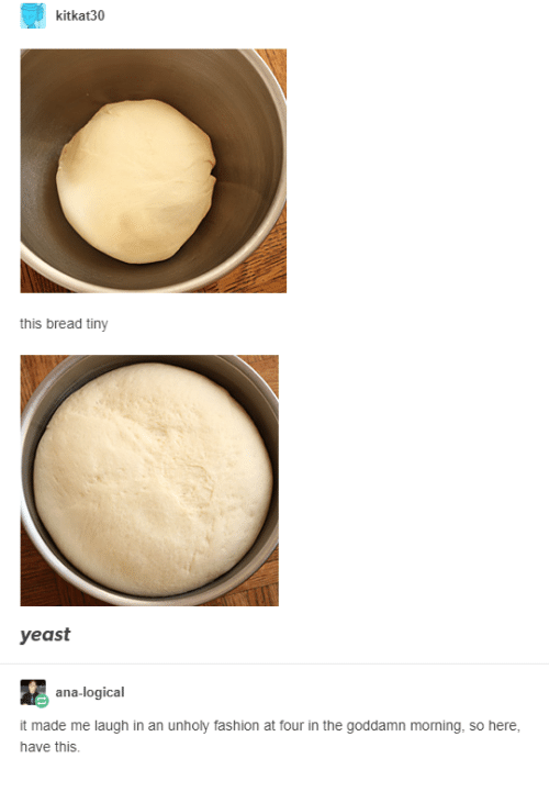 Fashion, Yeast, and Bread: kitkat30  this bread tiny  yeast  ana-logical  it made me laugh in an unholy fashion at four in the goddamn moning, so here,  have this