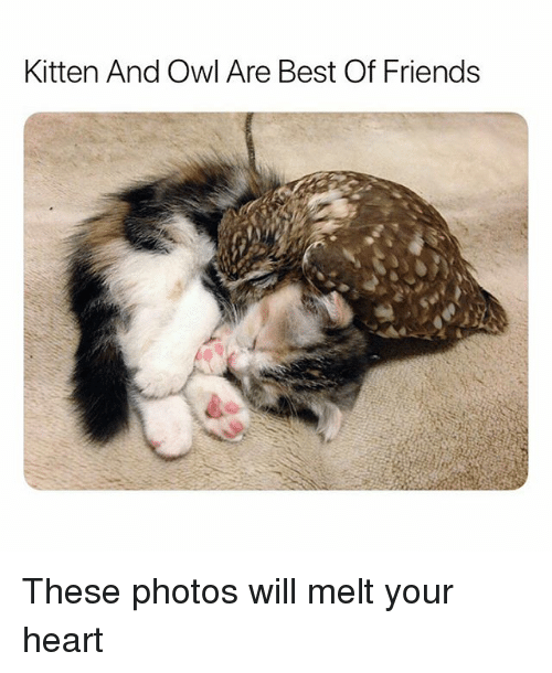 Friends, Funny, and Best: Kitten And Owl Are Best Of Friends These photos will melt your heart