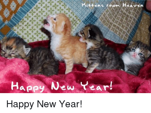 heaven memes and new years kittens from heaven happy new year happy