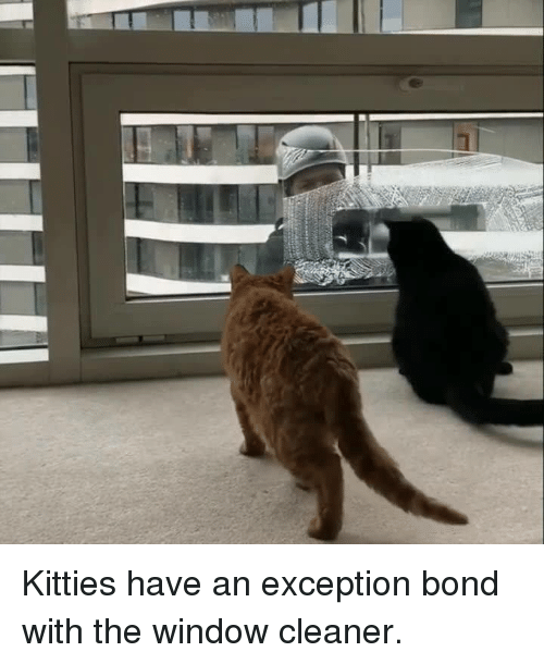 kitties have an exception bond with the window cleaner 15349678 ✅ 25 best memes about window cleaner window cleaner memes