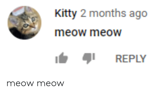 Kitty, Months, and Meow: Kitty 2 months ago  meow meow  REPLY meow meow