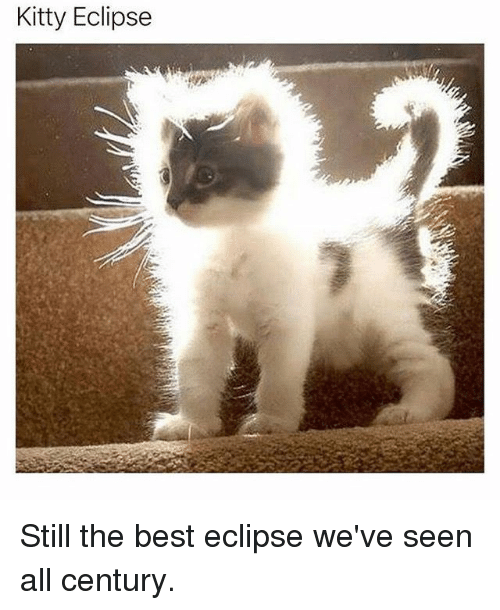 Kitty Eclipse Still the Best Eclipse We've Seen All Century | Meme on ME.ME
