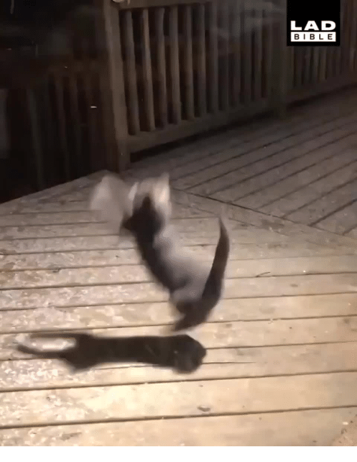 Snow, Ever, and Fist: Kitty's Fist Ever Snow