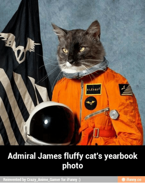 Anime, Cats, and Crazy: KLAXON  Admiral James fluffy cat's yearbook  photo  Reinvented by Crazy Anime-Gamer for iF