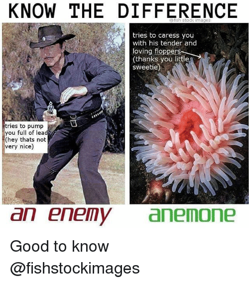 Memes, Good, and Nice: KNOW THE DIFFERENCE  h stock  mages  tries to caress you  with his tender and  loving floppers  thanks you little  sweetie)  tries to pump  you full of lead  (hey thats not  very nice)  an enemy anemone Good to know @fishstockimages