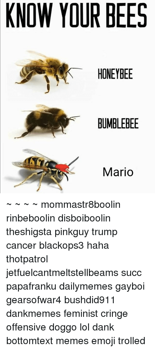 KNOW YOUR BEES HONEYBEE BUMBLEBEE Mario ~ ~ ~ ~ Mommastr8boolin