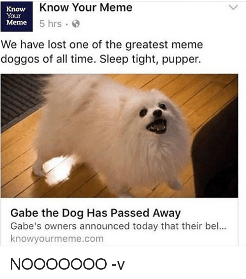 Memes, 🤖, and The Dog: Know Your Meme  Know  Your  Meme  5 hrs  We have lost one of the greatest meme  doggos of all time. Sleep tight, pupper.  Gabe the Dog Has Passed Away  Gabe's owners announced today that their bel...  knowyourmeme.com NOOOOOOO -v