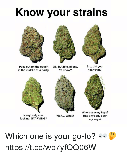 Fucking, Party, and Aliens: Know your strains  Pass out on the couch  in the middle of a party  Ok, but like, aliens.  Ya know?  Bro, did you  hear that?  Is anybody else  fucking STARVING?  Where are my keys?  Has anybody seen  my keys?  Wait... What? Which one is your go-to? 👀🤔 https://t.co/wp7yfOQ06W